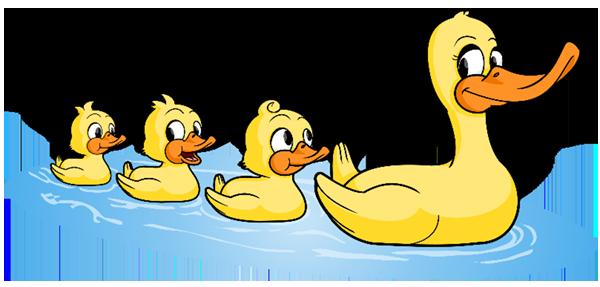 Swimming duck family